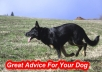 Send You 5 Great Advice For Your Dog